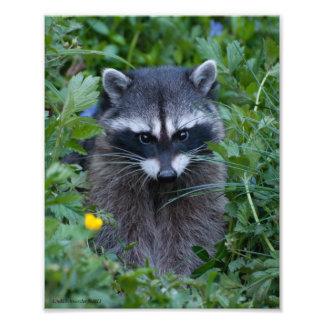 8X10 Raccoon Cutie Poo Photo Print