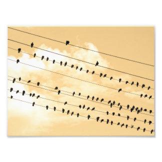 91(1) birds art photo