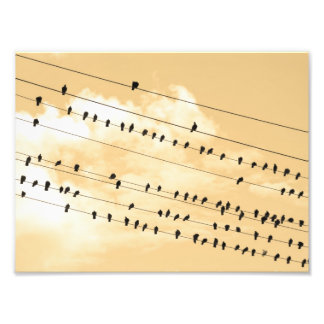 91(1) birds photo print