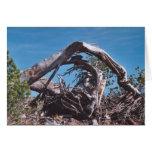 95. Sunny Wooden Arch, Mt. Shasta, WA Greeting Card