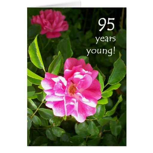 95th Birthday Card - Pink Roses