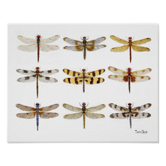 9 Dragonfly Species watercolors Poster