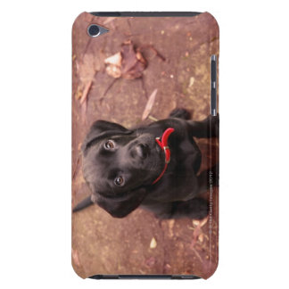 9 Week Old Black Lab iPod Touch Cases