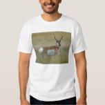 A0001 Pronghorn Antelope Buck Tee Shirts