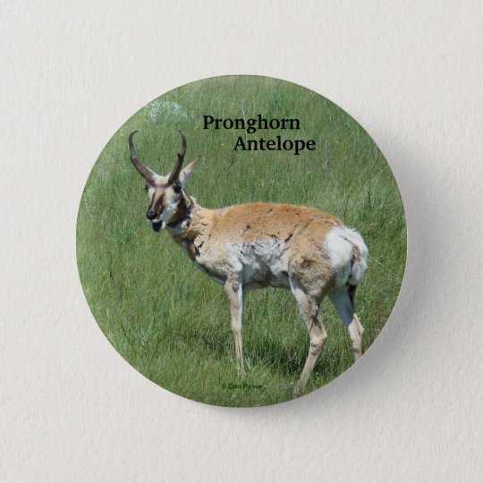 A0003 Pronghorn Antelope button