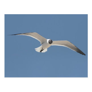 A5 Flying Seagull Postcard