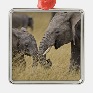 A African Elephant grazing in the fields of the Christmas Ornament