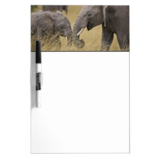 A African Elephant grazing in the fields of the Dry Erase Board