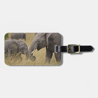 A African Elephant grazing in the fields of the Luggage Tag