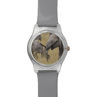 A African Elephant grazing in the fields of the Wristwatch