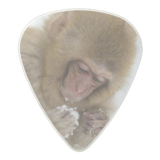 A baby Japanese Macaque (or snow monkey) Acetal Guitar Pick