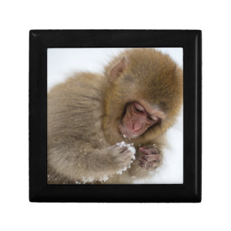 A baby Japanese Macaque (or snow monkey) Gift Box