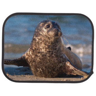 A baby seal coming ashore in Children's Pool Car Mat