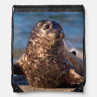 A baby seal coming ashore in Children's Pool Drawstring Bag
