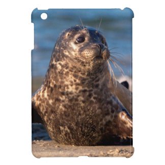 A baby seal coming ashore in Children's Pool iPad Mini Covers