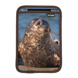 A baby seal coming ashore in Children's Pool iPad Mini Sleeve