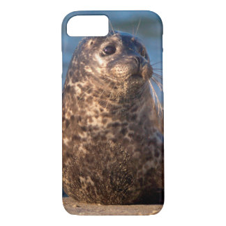 A baby seal coming ashore in Children's Pool iPhone 8/7 Case
