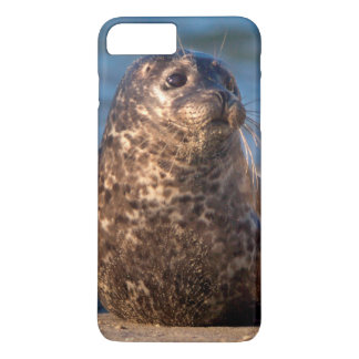 A baby seal coming ashore in Children's Pool iPhone 8 Plus/7 Plus Case