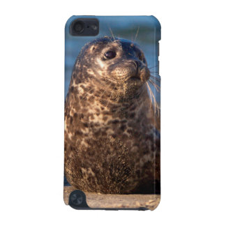 A baby seal coming ashore in Children's Pool iPod Touch (5th Generation) Case