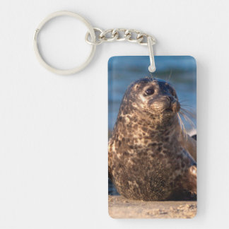 A baby seal coming ashore in Children's Pool Key Ring