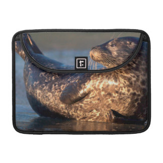 A baby seal lifting it's tail sleeve for MacBook pro