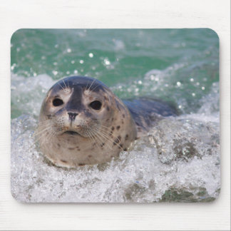 A baby seal surfing mouse mat