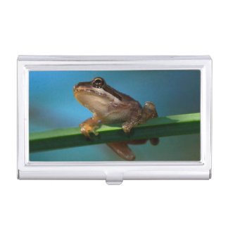 A Baby Tree Frog Business Card Holder