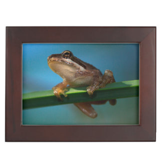 A Baby Tree Frog Keepsake Box
