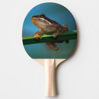 A Baby Tree Frog Ping Pong Paddle