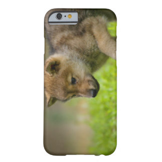 A baby wolf barely there iPhone 6 case