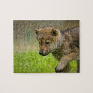 A baby wolf jigsaw puzzle