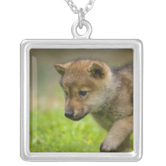 A baby wolf silver plated necklace