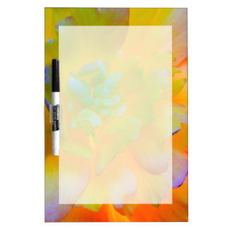 A back-lit, glowing begonia blossom dry erase board