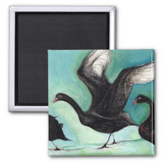 A ballet of Black Swans 2013 Square Magnet