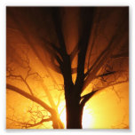 A Bare Tree At Sunset Photographic Print