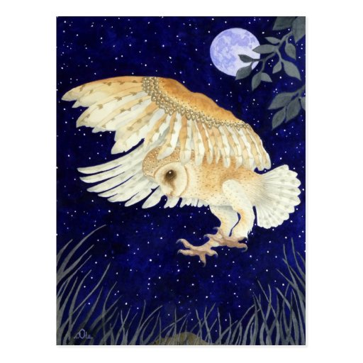 A Barn Owl in flight Postcards