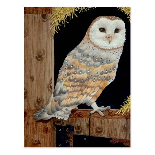 A Barn Owl rests on a barn door Postcards