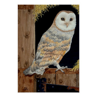 A Barn Owl rests on a barn door Poster