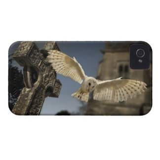 A Barn Owl (Tyto alba) in a graveyard in North Case-Mate iPhone 4 Cases