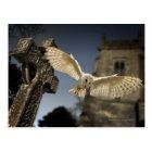 A Barn Owl (Tyto alba) in a graveyard in North Postcard