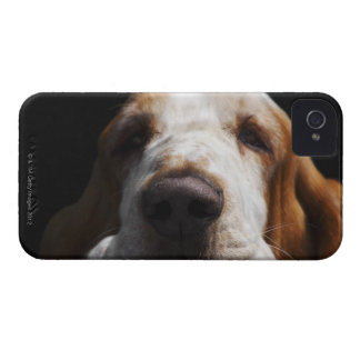 A Basset Hound resting his head iPhone 4 Case-Mate Cases