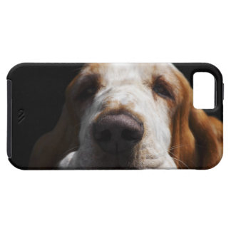 A Basset Hound resting his head iPhone 5 Cover