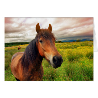A beautiful brown horse with dramatic sky, blank c greeting card