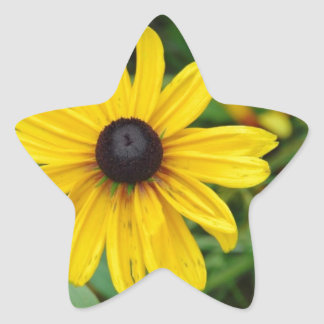 A beautiful close up of a yellow flower stickers