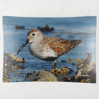 A Beautiful Dunlin Goes Solo Trinket Trays