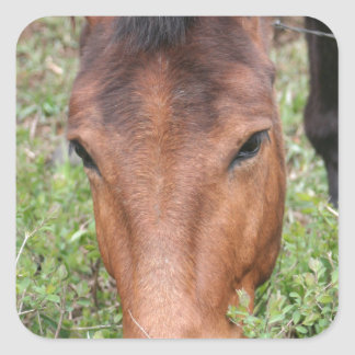 A Beautiful Grazing Horse Square Sticker
