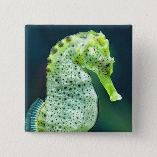 A Beautiful Knysna Seahorse 15 Cm Square Badge
