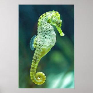 A Beautiful Knysna Seahorse Poster
