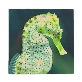 A Beautiful Knysna Seahorse Wood Coaster