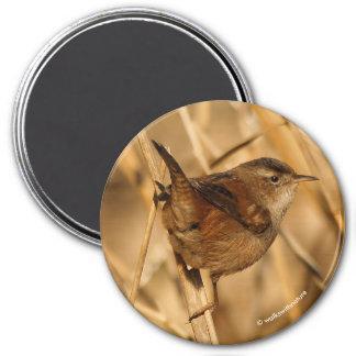 A Beautiful Marsh Wren in--Where Else?--the Marsh 7.5 Cm Round Magnet